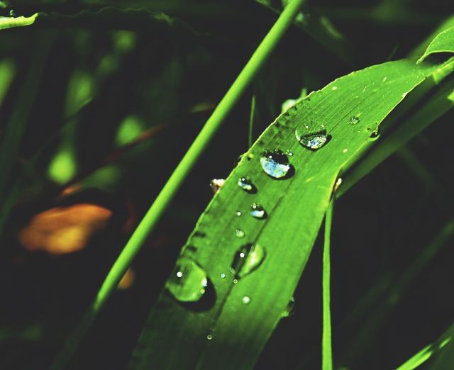 雨の季節?