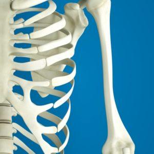 左側の肋骨にヒビが