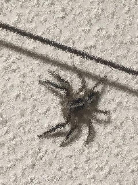 小さなクモ