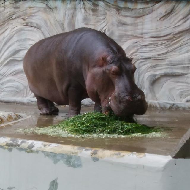 天王寺動物園のブログ